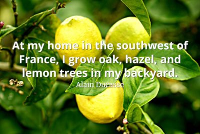 Alain Ducasse Quote At my home in the southwest of France, I grow oak, hazel, and lemon trees in my backyard