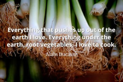 Alain Ducasse Quote Everything that pushes up out of the earth I love. Everything under the earth, root vegetables, I love to cook