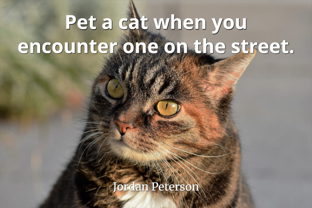 jordan-peterson-quote-Pet-a-cat-when-you-encounter-one-on-the-street