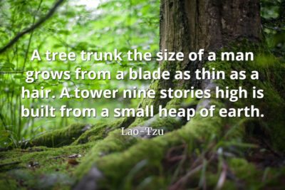 lao-tzu quote A tree trunk the size of a man grows from a blade as thin as a hair. A tower nine stories high is built from a small heap of earth