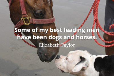 Elizabeth Taylor quote Some of my best leading men have been dogs and horses.