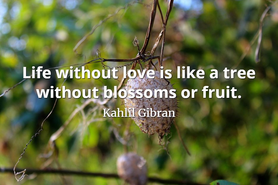 Image result for life without love is like a tree  without blossoms or fruit