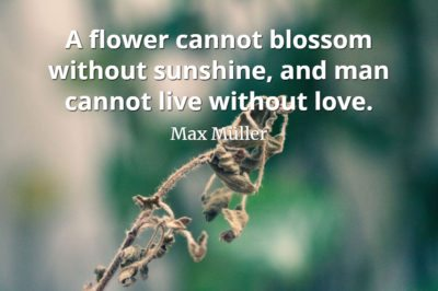 Max Muller quote A flower cannot blossom without sunshine, and man cannot live without love.