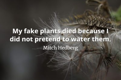 Mitch Hedberg quote My fake plants died because I did not pretend to water them