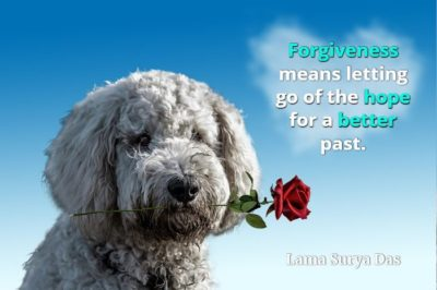 Large poodle with rose in mouth and Lama Surya Das quote, Forgiveness means letting go of the hope for a better past.